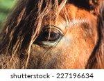 Horse Closeup The Eye