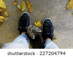 kitten at feet on ground... | Shutterstock . vector #227204794