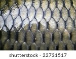 big carp scales close up as a... | Shutterstock . vector #22731517