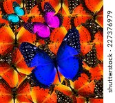 Butterfly Compilation Of...