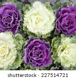 Green And Purple Decorative...