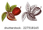 cocoa bean outline and color... | Shutterstock .eps vector #227518165