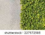 Gravel Texture And Strip Grass...
