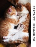 Stock photo two sleeping kittens hug one another 22762618