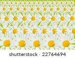 chamomiles | Shutterstock . vector #22764694