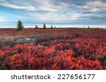 West Virginia Dolly Sods Wilderness Area Red Heath Autumn Landscape