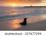 Baby Fur Seal At Punta Carola ...