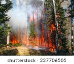 A Wildfire Burns In A Fir And...