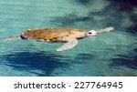 Big Sea Turtle Swimming In...