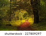 Tunnel Through A Forest During...