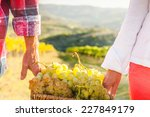 grape harvest | Shutterstock . vector #227849179