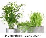 beautiful green plants in pots  ... | Shutterstock . vector #227860249