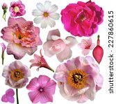Stock photo set of different flowers isolated on white 227860615