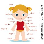 girl body parts chart for school   Shutterstock .eps vector #227876575