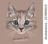 vector portrait of  domestic...   Shutterstock .eps vector #227890015
