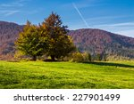 mountain autumn landscape. tree near meadow and forest on hillside  - stock photo