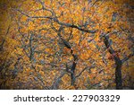 Oak branches with orange leaves during fall, Sweden - stock photo