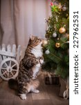tabby cat plays at the... | Shutterstock . vector #227962531
