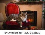 Stock photo tabby cat plays at the christmas tree christmas holidays 227962837