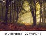 morning light through the trees ...   Shutterstock . vector #227984749