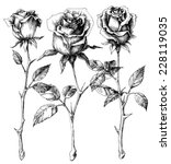 single roses drawing set | Shutterstock .eps vector #228119035