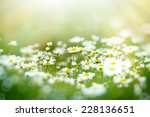 soft focus on daisy flower | Shutterstock . vector #228136651