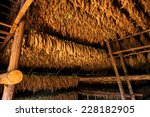 Drying Tobacco Leaves In A She...