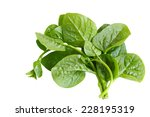 basella alba malabar spinach... | Shutterstock . vector #228195319