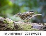 white      s thrush bird of... | Shutterstock . vector #228199291