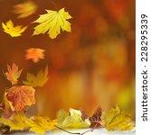 autumn leaves | Shutterstock . vector #228295339
