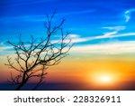 Sunset Tree Landscape