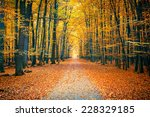 Pathway In The Bright Autumn...
