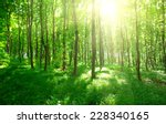 green forest background in a...   Shutterstock . vector #228340165