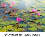 The Beautiful Blooming Lotus...