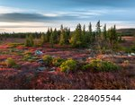 Dolly Sods Wilderness Area West Virginia Autumn Scenic
