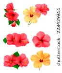 collection of colored hibiscus... | Shutterstock . vector #228429655