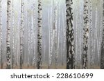 Grove Of Birch Trees And Dry...