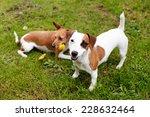 walking dogs | Shutterstock . vector #228632464