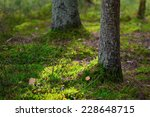 Beautiful sunlit autumn forest floor closeup with green moss, Sweden - stock photo