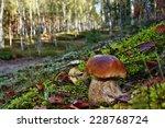 boletus edulis mushroom in the... | Shutterstock . vector #228768724