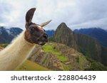 machu picchu  peru  unesco... | Shutterstock . vector #228804439