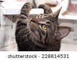 Tabby Cat With Yellow Eyes...