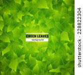 green leaves vector background. ... | Shutterstock .eps vector #228822304