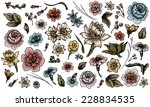 detailed hand drawn flower and... | Shutterstock . vector #228834535