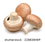 Common Mushroom
