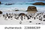 african penguins on boulders... | Shutterstock . vector #228888289