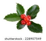 leaves of mistletoe with... | Shutterstock . vector #228907549