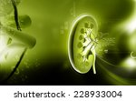digital illustration of kidney... | Shutterstock . vector #228933004