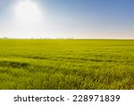 Green Field On A Sunny Day....