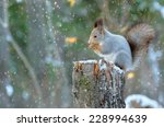 The Squirrel Sits On A Tree...